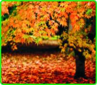 autumno